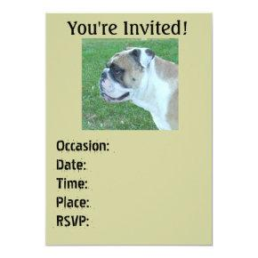 Englis Bulldog  Birthday/any occasion