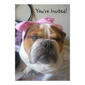 English Bulldog Birthday or any occas