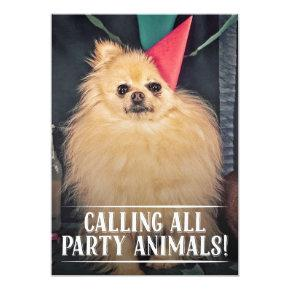 PET DOG'S BIRTHDAY PARTY PHOTO INVITE